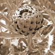 Growing Artichoke sepia — Stock Photo #1392234
