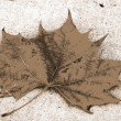 Stock Photo: CanadMaple Leaf Fall Season sepia