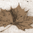 Canada Maple Leaf Fall Season sepia — Stock Photo