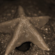 Starfish sepia — Stock Photo #1445603