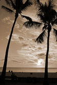 Palm Trees at Sunset sepia — Stock Photo