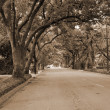 Canopy of Trees lining road — Foto de stock #1517849