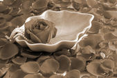 Red Rose flower petals spa aromatherapy sepia — Stock Photo