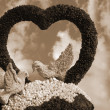 Stock Photo: Valentine birds and rose flower heart sepia