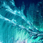 Frozen textures on a window — Stock Photo