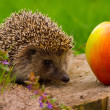 Hedgehog and apple on the tree stump - Stock Photo