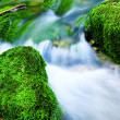 Mountain stream — Stock Photo #1312468