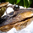 White gold ring with the black pearl and - Stock Photo