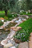 Fiori di primavera nel giardino asiatico con — Foto Stock