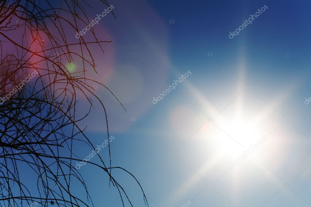Sun shine on blue sky with tree — Stock Photo #1312195