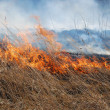 Grass fire — Stock Photo