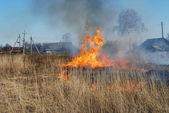 Grass fire#07 — Stock Photo