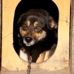 Про собачью верность и людскую жестокость.
