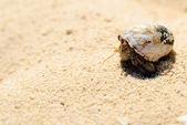 在白色的沙滩上的寄居蟹 — 图库照片