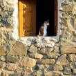 Cat at wood window in stone house — Stock Photo