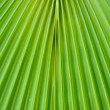 Green palm leaf texture — Stock Photo #1297617