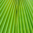 Stock Photo: Green palm leaf texture