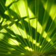 Green palm leaf texture — Stock Photo #1297660