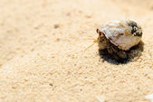 Hermit crab on white sand — Stock Photo