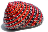 Beautiful red-black-white sea shell — Stock Photo