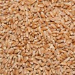 Brown wheat grains - Stock Photo
