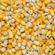 Stock Photo: Yellow corn grains