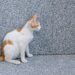 Red white sitting cat — Stock Photo