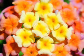 Group of small flowers — Stock Photo