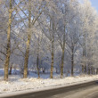Winter poplar trees alley — Stock Photo #1818016