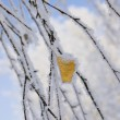 Frozen yellow leaf — Stock Photo