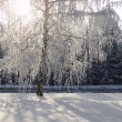 Winter birch trees alley — Stock Photo #1818494