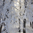 Beautiful hoarfrost — Stock Photo