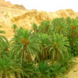 Stock Photo: Oasis in desert