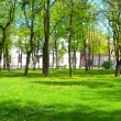 Spring park with green grass — Stock Photo