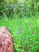 Landscape c wildflowers — Stock Photo
