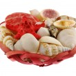 Seashells composition in red crib — Stock Photo