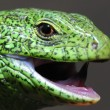 Green lizard — Stock Photo #1293184