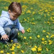 Small boy in dandelions — Stock Photo