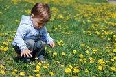 Malý chlapec v pampelišky — Stock fotografie