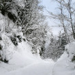 Snowy winter forest with path — Stock Photo