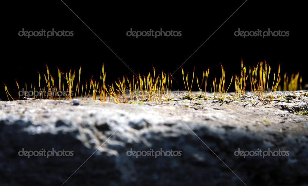 Grass growing from crack in old asphalt pavement  Stock Photo #1296675