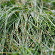 Green grass with dew — Stock Photo #1344873