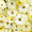 Beautiful yellow flowers background — Stock Photo