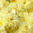 Beautiful yellow flowers background — Stock Photo #1345014