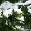 Green fir-tree branches — ストック写真