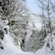 Snowy winter forest with path — Stock Photo #1345162