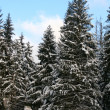 Snowy winter forest with path — Stock Photo #1345214