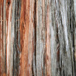 Closeup of old juniper tree bark - Stock Photo