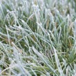 closeup of frosty grass — Stock Photo