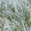 Stock Photo: Closeup of frosty grass